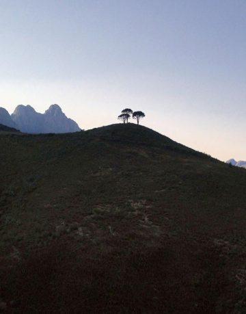 3 Pines Syrah Vineyard